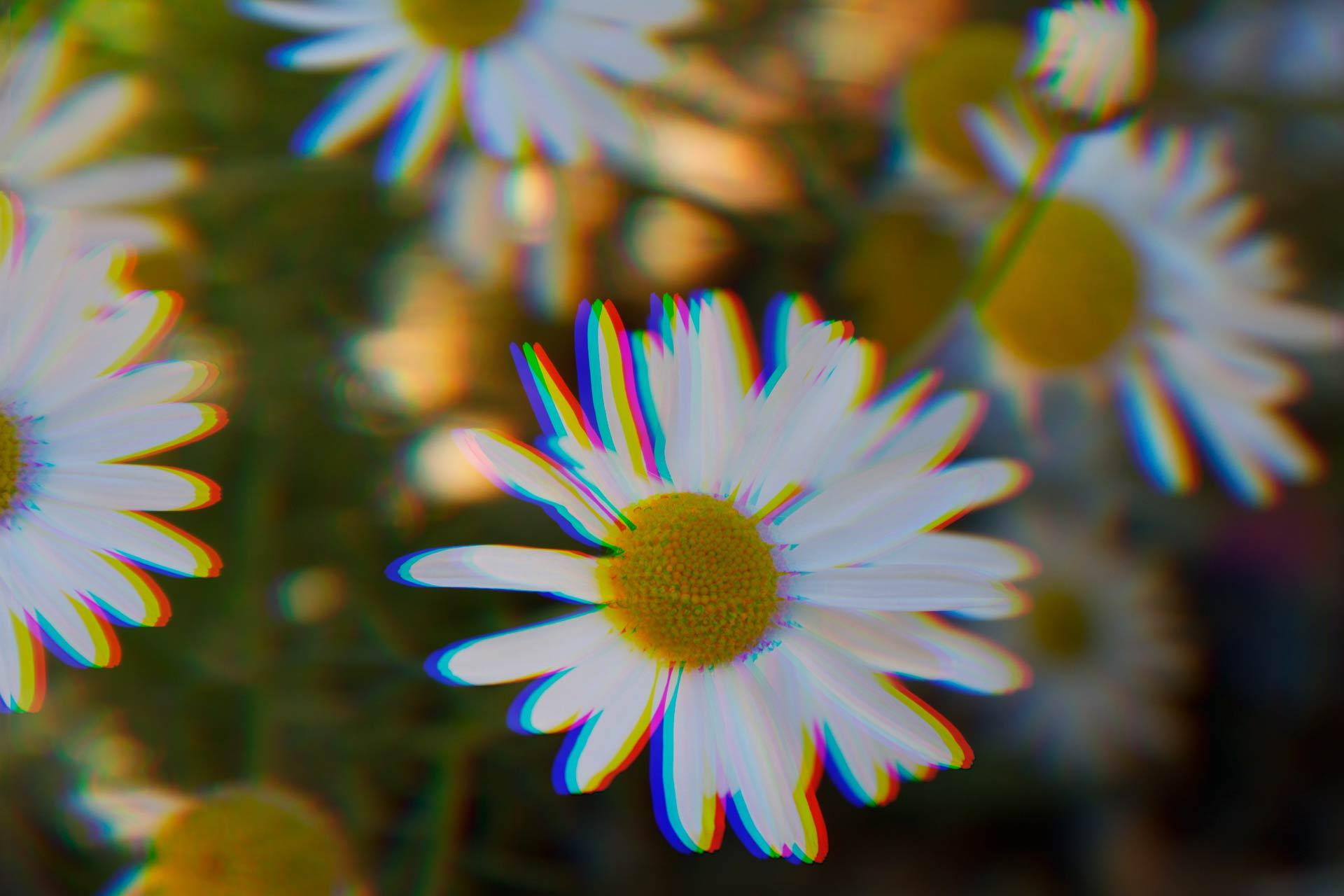 Trippy-Flowers-better